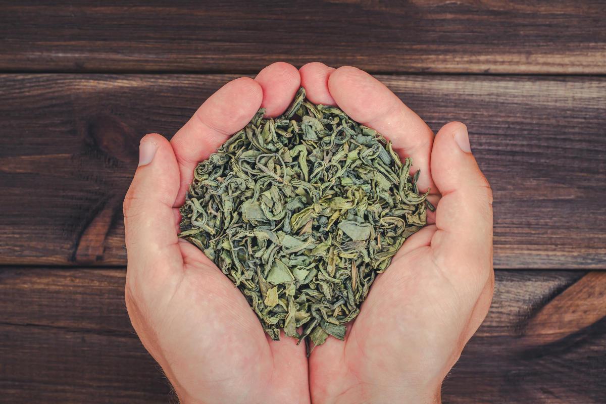 Schützt grüner Tee vor Krebs?